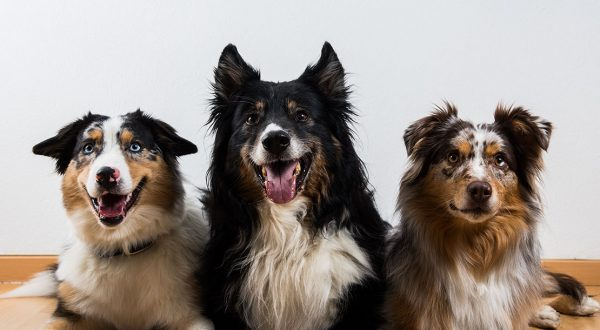 3 Hunde der Trainerinnen