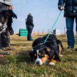 Schnuppertag der Hundeschule Vitis