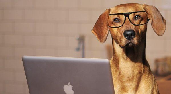 Hund mit Lesebrille am Laptop